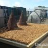 Freshfields-Primary5